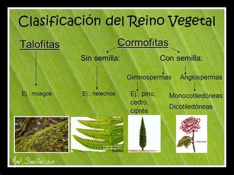 Reino Vegetal. - ppt descargar