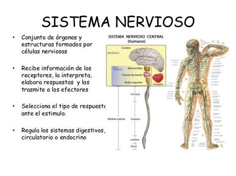 Relación entre función nerviosa y endocrina