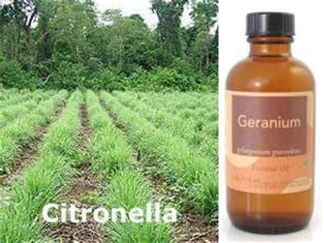 Repelente de insectos y antimosquitos con extracto de ...