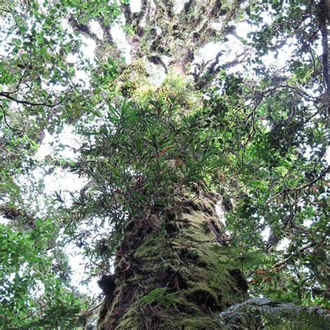 Reportajes y fotografías de Bosques en National Geographic