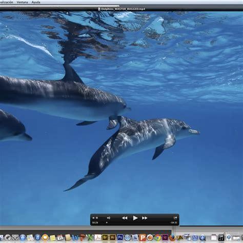 Reportajes y fotografías de Delfines en National Geographic