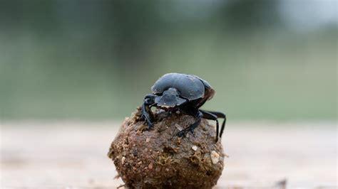 Reportajes y fotografías de Insectos en National Geographic