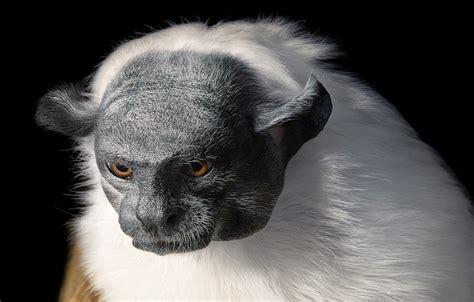 Reportajes y fotografías de Monos en National Geographic