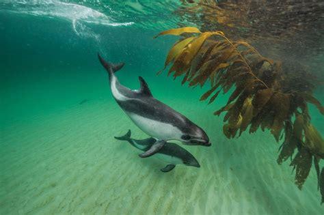 Reportajes y fotografías de Orcas en National Geographic