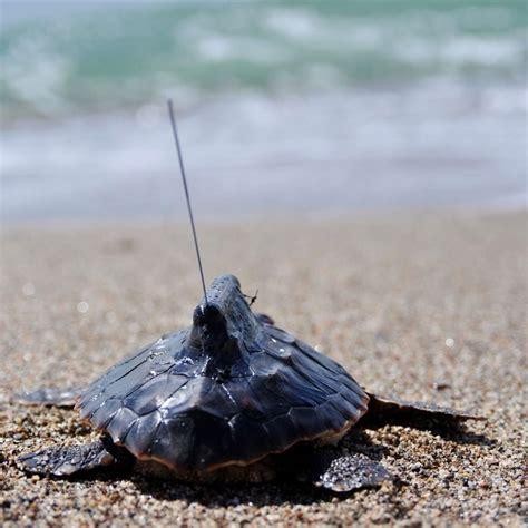 Reportajes y fotografías de Tortugas en National Geographic