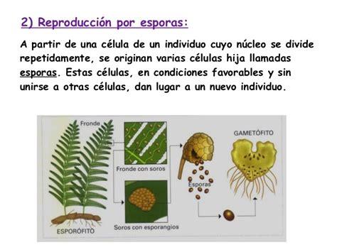 Reproducción asexual en animales y plantas