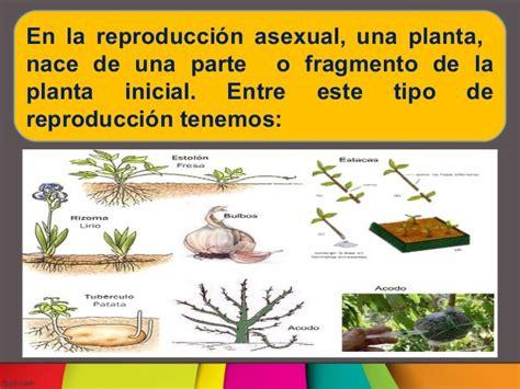 Reproduccion asexual en plantas