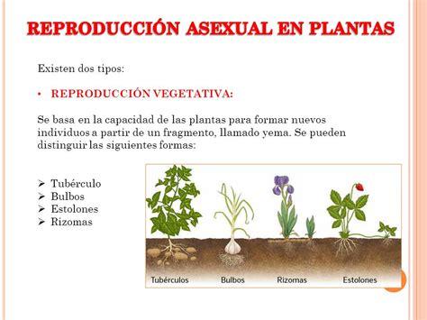 REPRODUCCIÓN ASEXUAL EN PLANTAS Y ANIMALES   ppt video ...