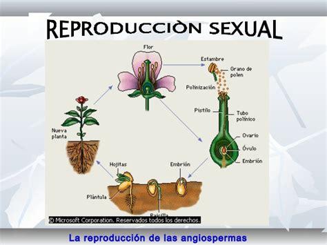 Reproduccion de plantas