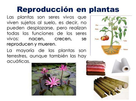 Reproducción en plantas - ppt video online descargar