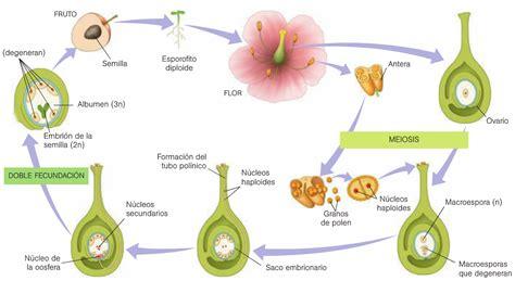 Reproducción sexual en las plantas: abril 2015