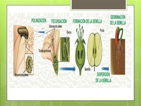 Reproducción sexual y asexual en plantas