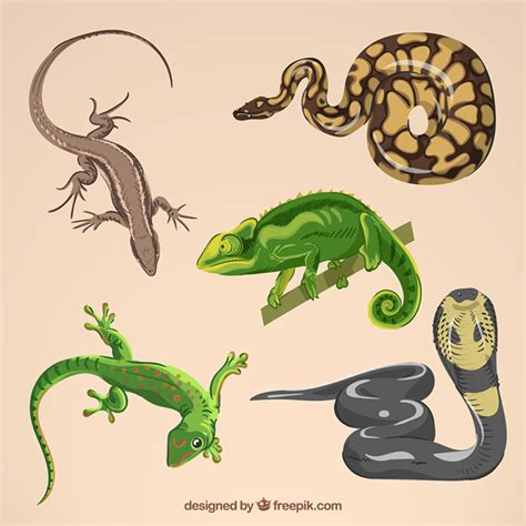 Reptile Vectors, Photos and PSD files | Free Download