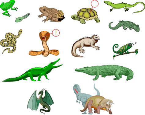 Reptiles & Amphibians:die Reptilien und die Amphibien ...