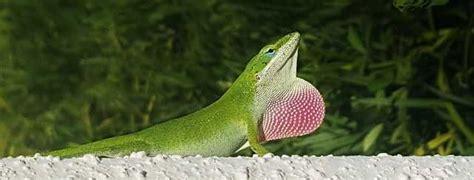 Reptiles bonitos, algunas especies increíblemente guapas