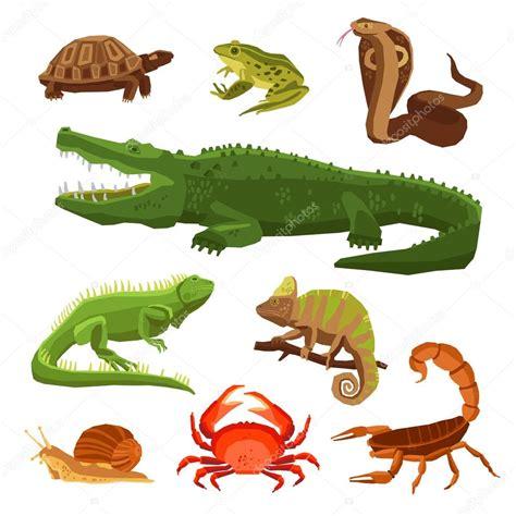 Reptiles y anfibios conjunto — Archivo Imágenes ...