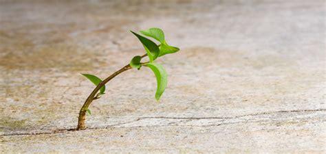 Resiliencia - Blog de Elena Miró