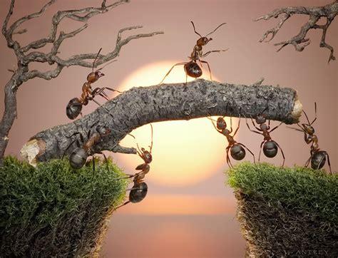 Resiliencia según la psicología