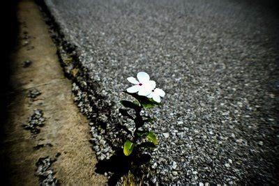 Resiliencia, un concepto controvertido   : Desesperada
