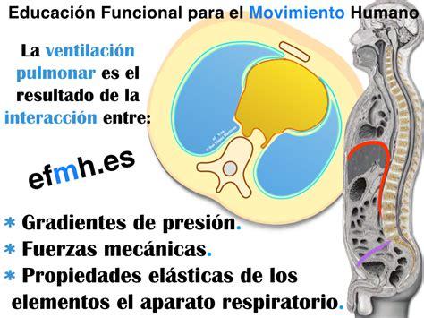 Respiración: anatomía fascial, fisiología y presiones para ...