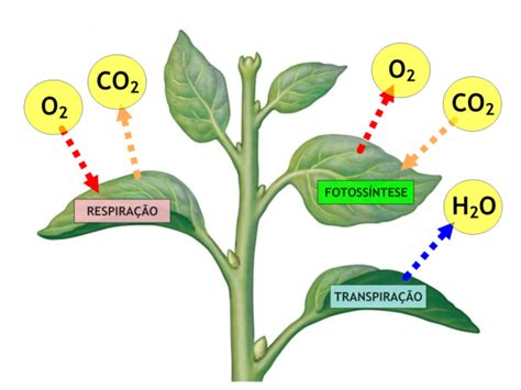 Respuestas al estrés por salinidad en las plantas