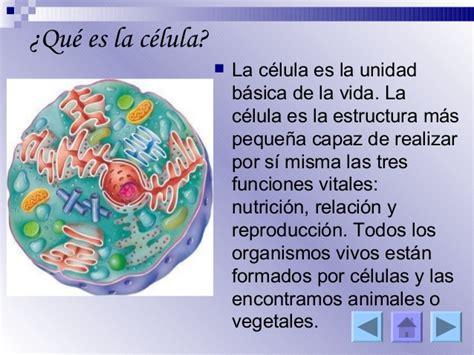 Resultado de imagen de que son las celulas | ESTUDIANDO ...