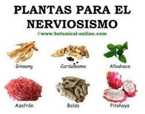 Resultado de imagen para valeriana planta medicinal ...
