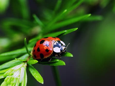 Retire from the usual in Liverpool, Nova Scotia : Lady Bug ...
