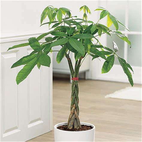 Reto Small&LowCost: decorar con plantas mediante el Feng ...