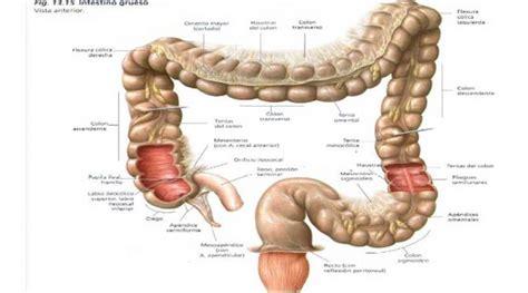 Revista FactorRH   Enfermedad Inflamatoria Intestinal ...