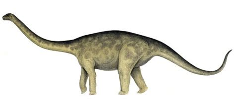 Rhoetosaurus - Australian Museum