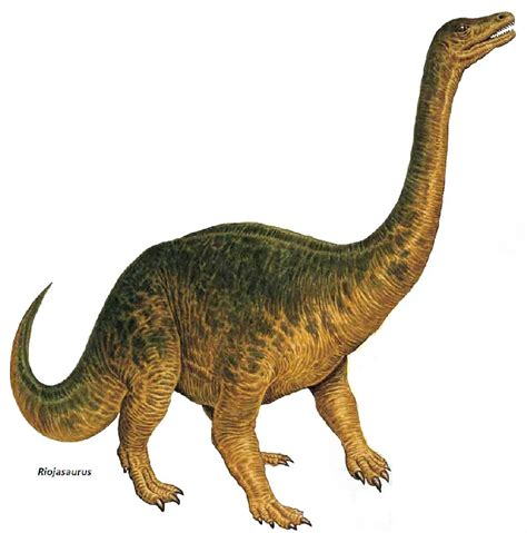 Riojasaurus Pictures & Facts   The Dinosaur Database