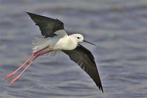 RobinAge: Environment   Types of Winter Migratory Birds