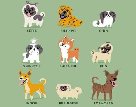 Rocío... y Algo Más: ¿Cuántas razas de perros hay en el mundo?