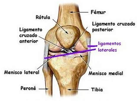 Rodilla LIGAMENTO CRUZADO ANTERIOR (LCA) | Fisioterapeuta ...