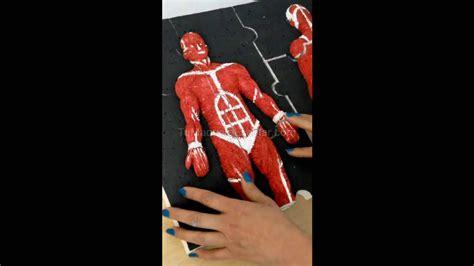 Rompecabezas del sistema muscular - YouTube