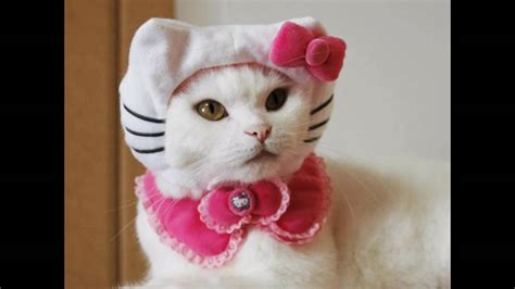 Ropa para gatos de navidad - YouTube