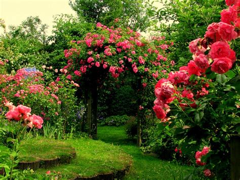 Rose Garden Wallpapers   Wallpaper Cave