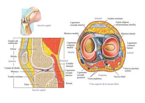 Rotura del ligamento cruzado de la rodilla, esguince, síntomas
