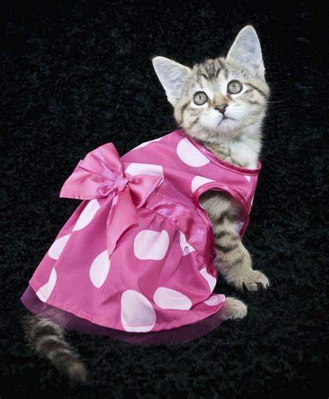 Roupinhas para Gatos Filhotes, Fotos e Modelos   Ideias Mix