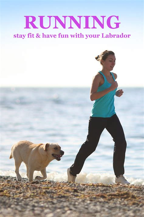 Running With Your Labrador - The Labrador Site
