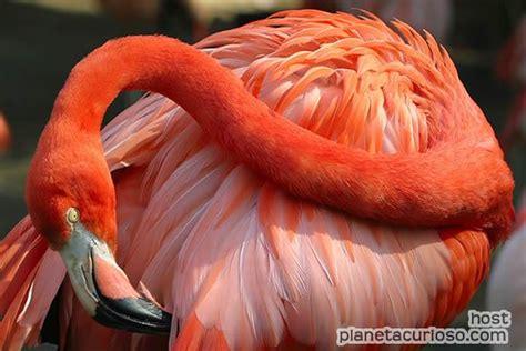 ¿Sabías que los flamencos se 'maquillan' para encontrar ...