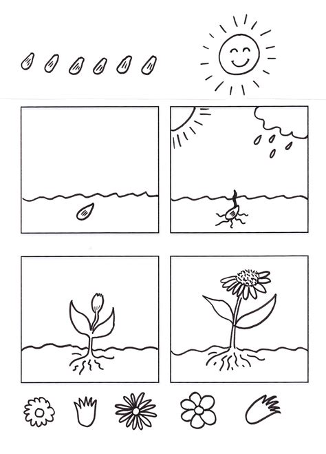 salarosa12:  Las Plantas