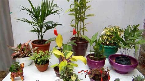 Salas Pequeñas Decoradas Con Plantas