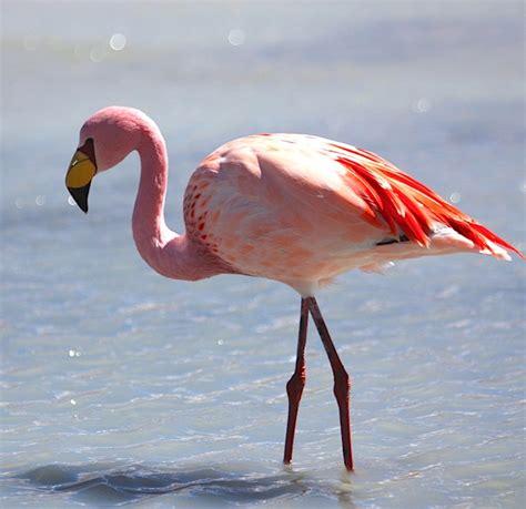 Santuario de Flamingos Rosados