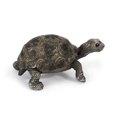 Schleich Giant Tortoise Young Animal Figure NEW | eBay