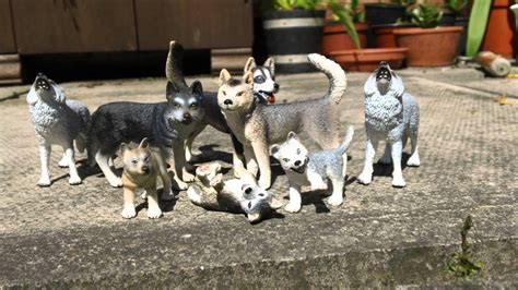 Schleich Wolf and Husky toy collection   YouTube