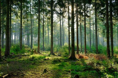 Scientists warn of unprecedented damage to forests across ...