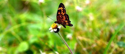 Se busca la mariposa del año