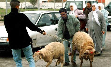 Se prohíbe el paso de borregos por Melilla para la fiesta ...